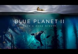 Blue Planet II : The Prequel